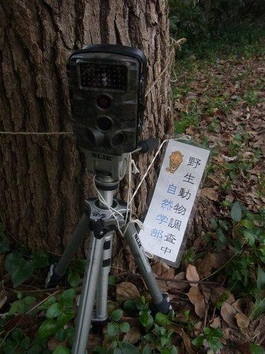 19動物撮影用センサーカメラ2020年1月.jpg