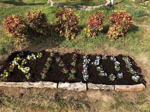 20201211花壇の手入れ写真1.jpg